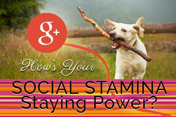 social stamina staying power dog running with stick Fat Eyes Web Development blog